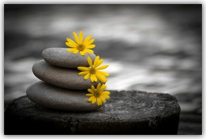 gray stones with yellow daisies 300x203 Top 8 Ways to Get More From Your Massage
